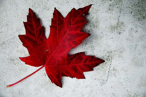 Happy Canada Day from Orthodontics at Don Mills!